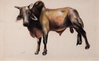 Untitled (Bull)