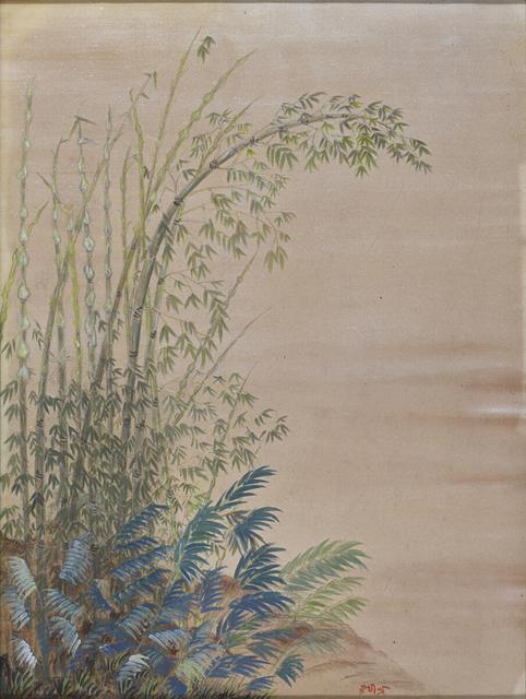 Untitled (Bamboo Bushes)